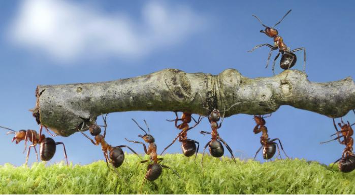 Waarom samenwerken in system development?